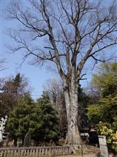 乃木将軍も何度かお参りされた「野木神社」。