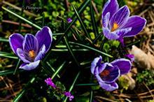 春 SAMPO 📷