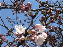 春一番・・・