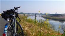 利根川土手サイクリング