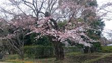 もうすぐ4月です(*^^*)
