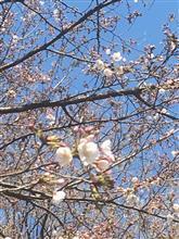 桜も咲いて