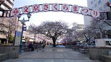 播磨坂の桜2017