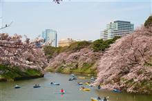 納車2年記念日 drive 🚙 🌸東京の人気お花見スポットめぐり🌸