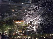 ホテルメトロポリタンの桜