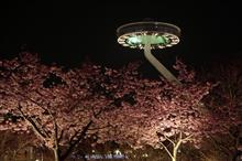 三重・なばなの里 梅と桜のイルミネーション♪
