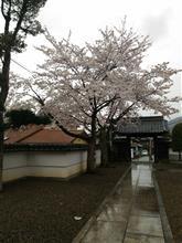 雨降りでした…(-_-)