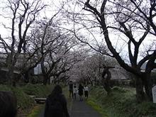 しだれ桜を見に(^_-)-☆!。