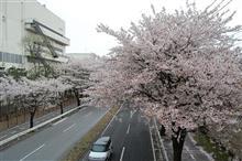 去年の今頃は・・・桜の名所