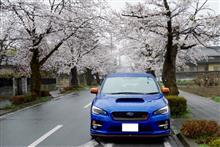 4/8 長瀞 桜観光ドライブ&1万km到達