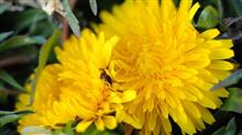 桜と黄色い花