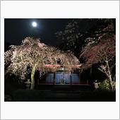 月、梅そして・・・桜