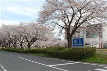 桜が満開になりました・・・北関東から