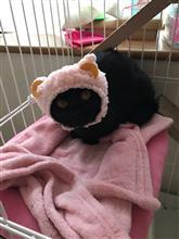 いたずらされる黒猫