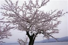 桜オフ。本番