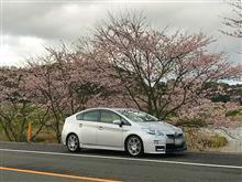 """""""愛車と桜""""こぼれ話"""
