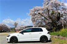 【 桜 ツーリング 】 春の絨毯 踏み 駈けぬけろ
