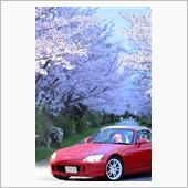 はからずも車と夜桜