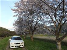 桜プチ遠征に徳島へ(^^♪ 前編