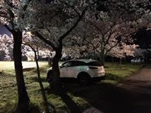 高田公園観桜会