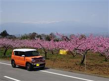 桃源郷巡り(その4)花鳥山でお花見とリニア
