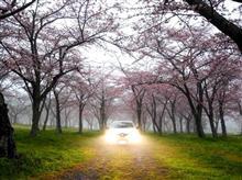 2017年の桜と富士山と…