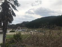 家族で桜見に行きました
