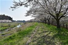 成田市桜ドライブ H29.04.15