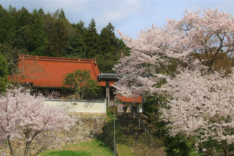 桜を求めて2017