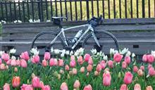 春の プチ・サイクリング