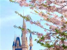 Tokyo Disneylandの桜