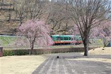 4月も半ば・・・桜は??