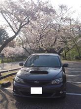 ようやく実現!桜とインプレッサ(^^♪