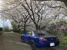 桜と愛車!2017