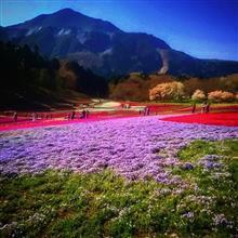 秩父の芝桜を訪ねて