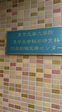東京大学へ
