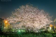 SAKURA PATROL × FACTORY NIGHT VIEW