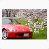 車と満開の桜、光あれ