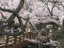 高遠桜の花見ツーリング(カワサキショップ)