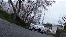 桜が散って