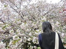 遅いお花見と東京タワー(^o^)