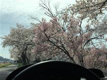 RCZで久し振りの八ヶ岳南麓桜めぐりドライブ…♪