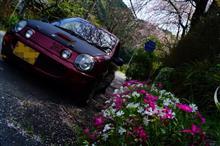 桜が散った?なら、咲いてる所まで行けば良い!桜リレー、よ~いどん!リベンジ編