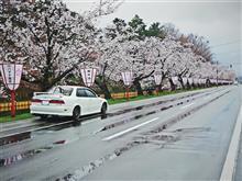 「春が来るとこの川辺は桜がめいっぱい咲き乱れるんだ」