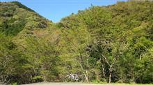 新緑サイクリング