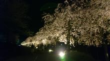 夜桜見物♪