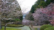まだありました(^^)/・・・桜