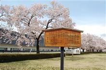 桜散る・・・