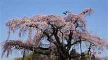 今日の花見は小野町方面!