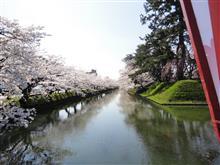 ニュータイヤの慣らしがてら桜を愛でに